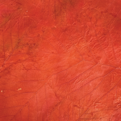 mullberrypaper with red teak leaves