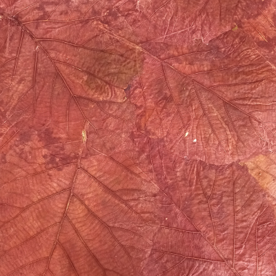 mullberrypaper with teak leaves